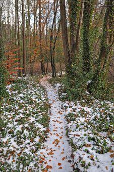 Free Lucan Wintertime Royalty Free Stock Photo - 17284995