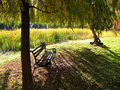 Free Wooden Bench In Park Royalty Free Stock Photos - 17293848