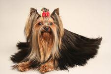 Free Dog Royalty Free Stock Photo - 17292345