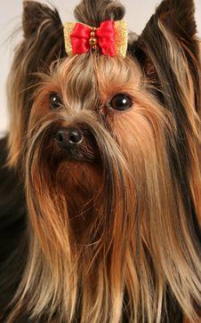 Free Dog Royalty Free Stock Image - 17292436