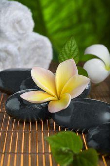 Free Flower Royalty Free Stock Photo - 17293095