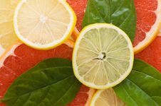 Free Fresh Juicy Grapefruits With Green Leafs Royalty Free Stock Photo - 17294395