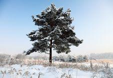 Free Snowy Tree Stock Photo - 17294720