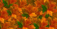 Free Maple Leaves Royalty Free Stock Image - 17294866