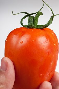 Vegetable Ripeness Assessment Royalty Free Stock Photos