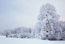 Free Trees In Winter Royalty Free Stock Images - 17296809