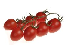Free Wet Cherry Tomatos On The Vine Royalty Free Stock Photography - 17297737