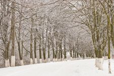 Free Winter Alley Royalty Free Stock Photography - 17298007