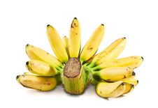 Free Banana(Pisang Mas) Stock Photos - 17299353