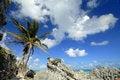 Free Palm Sky Stock Image - 1733201