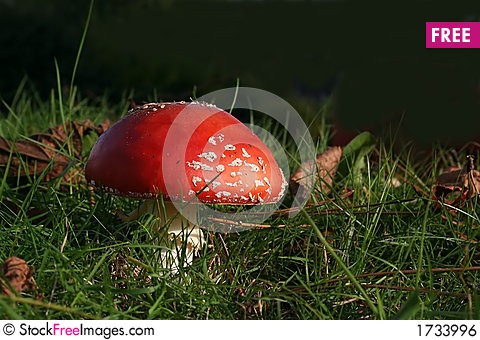 Free Fly Agaric Royalty Free Stock Image - 1733996