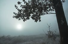 Free Fog Stock Images - 1730304
