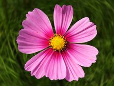 Free Pink Flower Stock Photos - 1730833