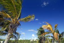 Windy Palms Stock Photo