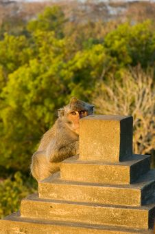 Free Monkey In A Temple Royalty Free Stock Image - 1734266