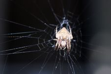 Free Porch Spider Face Stock Photo - 1734340