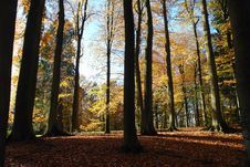 Free Autumn Forest. Royalty Free Stock Images - 1734739