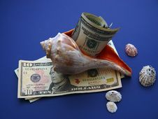 Free USD Wrapped In Seashell Royalty Free Stock Photos - 1736978