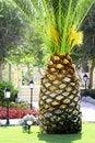 Free Palm Tree Like Big Pineapple Stock Photo - 17309300