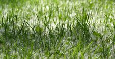 Free Background Of Green Grass Stock Photography - 17300662