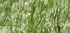 Free Background Of Green Grass Stock Image - 17300681