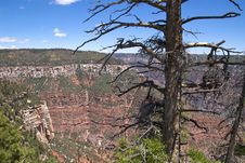 Grand Canyon North Rim Stock Photo