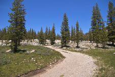 Free Soda Springs, Yosemite NP Royalty Free Stock Image - 17302236