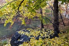 Free View Into The Forest Of Central Park Royalty Free Stock Photography - 17302967