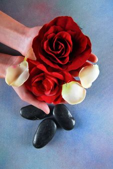 Free Woman Hands Holding Roses Stock Photography - 17303062