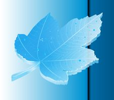 Free Maple Leaf 3 Royalty Free Stock Photo - 17303775