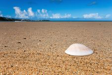 Free Sea Shell On A Beach Stock Photography - 17303882
