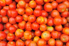 Free Tomatoes Stock Images - 17304224
