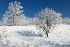 Free Beautiful Frozen Trees Royalty Free Stock Photos - 17305568