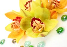 Free Yellow Orchid Royalty Free Stock Image - 17306646