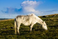 Free Bodmin Moor Cornwall Pony Stock Images - 17306844