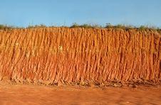 Free Texture Of Soil Stock Photos - 17307773