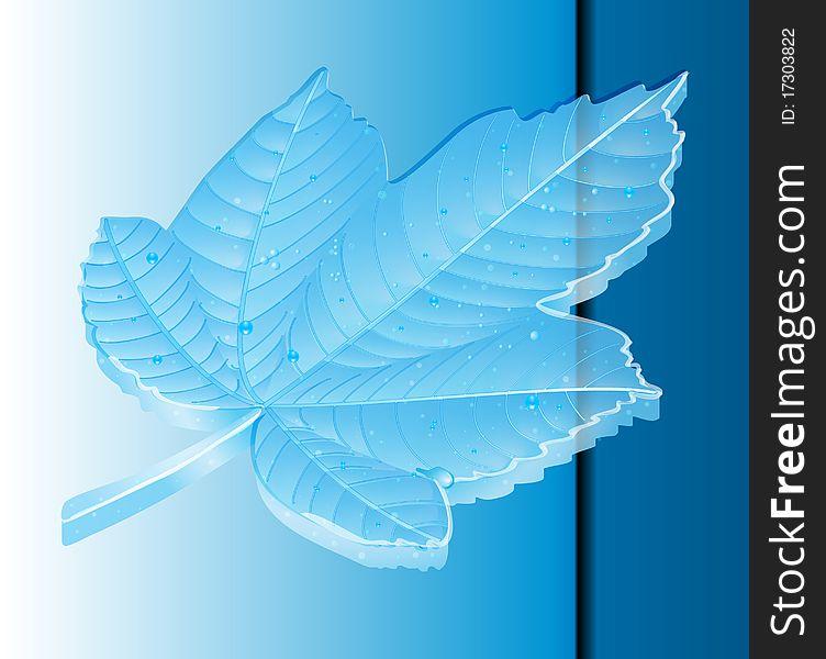 Maple leaf 8