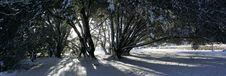 Free Winter Sun Snow Trees Stock Images - 17310064