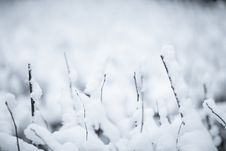 Free Winter Royalty Free Stock Photography - 17310887
