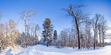 Free Winter Landscape Royalty Free Stock Images - 17310959