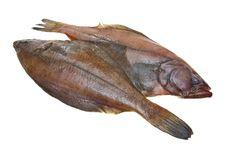 Free Four Fresh Flounder Fishes Stock Photos - 17311883