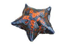 Free Starfish Stock Photo - 17312120