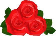 Free Rose Stock Photo - 17312300