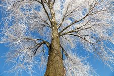 Free Frozen Tree Royalty Free Stock Image - 17313976