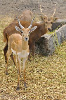 Free Deer Stock Photo - 17315210