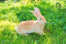 Free Cute Rabbit On The Grass Stock Photography - 17315242