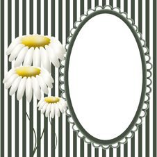 Free Frame And Chamomiles Royalty Free Stock Images - 17316499