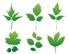 Free Leaves Silhouettes Set For Design. Royalty Free Stock Image - 17318846