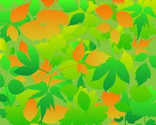 Free Leaves Abstract Background . Royalty Free Stock Images - 17318919