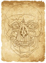 Free Skull On Old Paper Royalty Free Stock Photos - 17325018